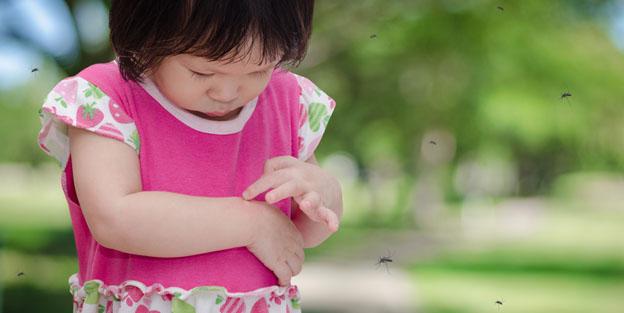 Los mejores repelentes naturales de mosquitos