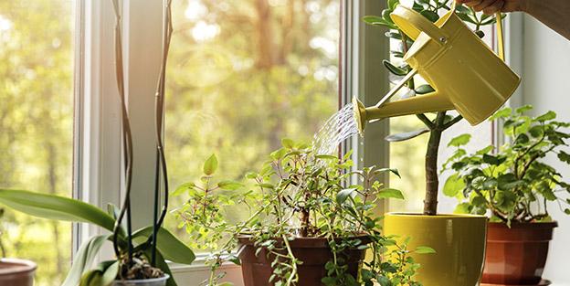 Trucos para regar las plantas en verano