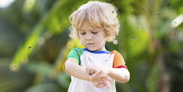 Remedios caseros para repeler mosquitos